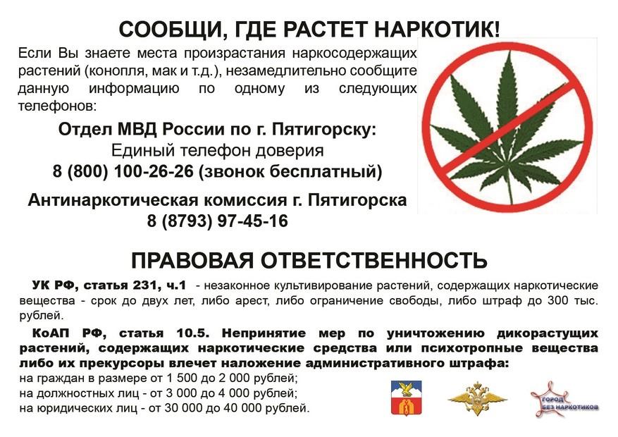Статьи за марихуану коноплей кормят чижа